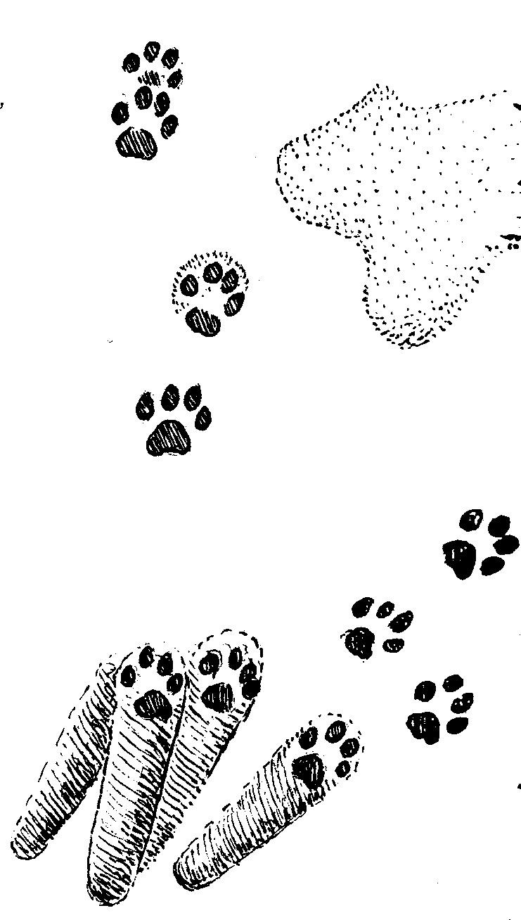 картинки следы кошачьи