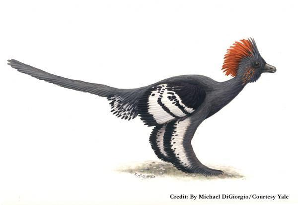 Anchiornis-colors.jpg